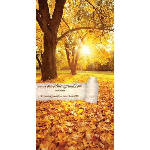 Autumnal Backdrops AS0114